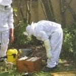 Bee Removal by Pest Protect